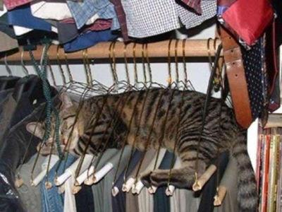 ハンガー猫